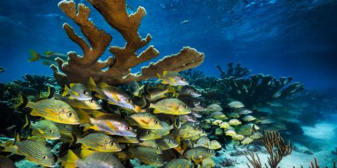 underwater ocean with schools of fish swimming