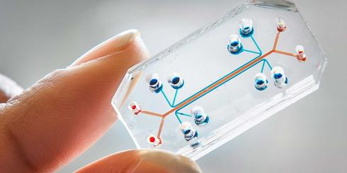 organs on a chip - microfluidics
