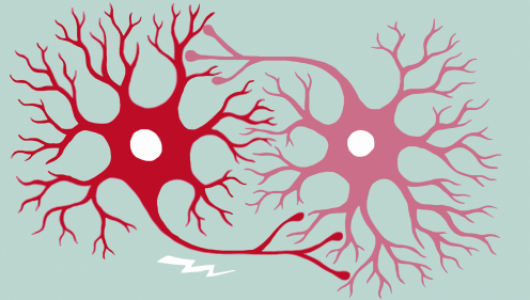 An illustration of two neurons.